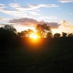 Sonnenuntergang bei der Abend-Pirschfahrt