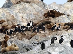 Seelöwen und Kormorane