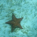 Riesen Seestern