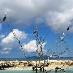 Rest Sandy Island mit Pelikanen