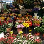 Blumenstand am Campo dei Fiori