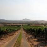 Auffahrt zu einer Weinkellerei