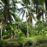 Dschungel im Mekong-Delta