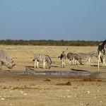 Artenvielfalt am Wasserloch