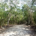 Cobá: Weg durch den Dschungel