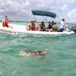 Schildkröte in der Laguna Campechén