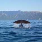 """Walfluke mit """"Wasservorhang"""""""
